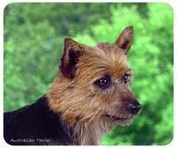 Australian Terrier Mousepad