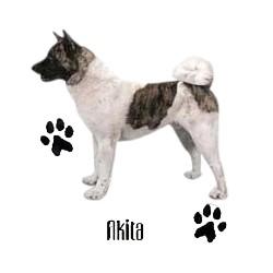 Akita T-Shirt - Profiles