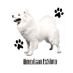 American Eskimo Dog T-Shirt - Profiles