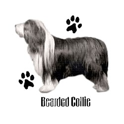 Bearded Collie T-Shirt - Profiles