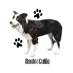 Border Collie T-Shirt - Profiles