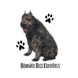 Bouvier des Flandres T-Shirt - Profiles