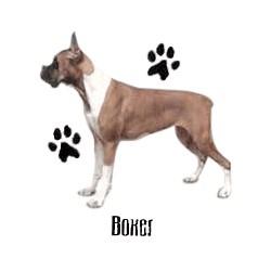 Boxer T-Shirt - Profiles