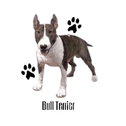 Bull Terrier T-Shirt - Profiles