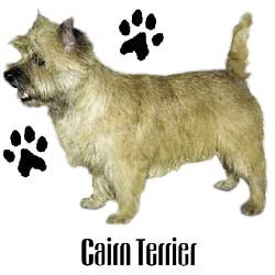 Cairn Terrier T-Shirt - Profiles