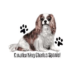 Cavalier King Charles Spaniel T-Shirt - Profiles