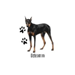 Doberman Pinscher T-Shirt - Cropped