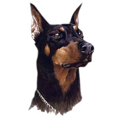 Doberman Pinscher T-Shirt - Jim Killen