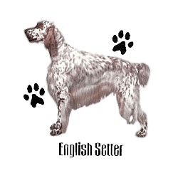 English Setter T-Shirt - Profiles