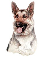German Shepherd T-Shirt - Jim Killen