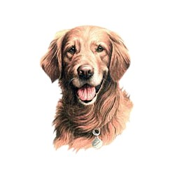 Golden Retriever T-Shirt - Jim Killen