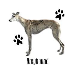 Greyhound T-Shirt - Profiles