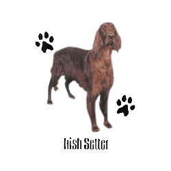 Irish Setter T-Shirt - Profiles