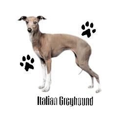 Italian Greyhound T-Shirt - Profiles