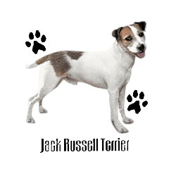 Jack Russell Terrier T-Shirt - Profiles