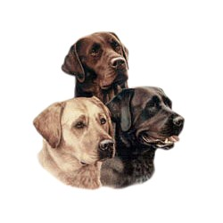 Black Lab T-Shirt - All Three Colors