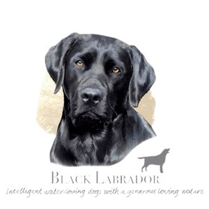Black Lab T-Shirt - Howard Robinson