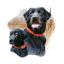 Black Lab T-Shirt - In Field