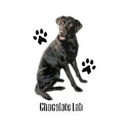 Chocolate Lab T-Shirt - Profiles