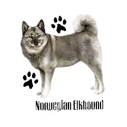 Norwegian Elkhound T-Shirt - Profiles