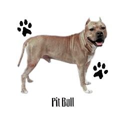 Pit Bull Terrier T-Shirt - Profiles