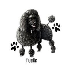 Black Poodle T-Shirt - Profiles