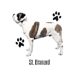Saint Bernard T-Shirt - Profiles