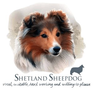 Shetland Sheepdog T-Shirt - Trio of Three