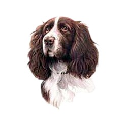 Springer Spaniel T-Shirt - Jim Killen Brown