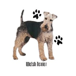 Welsh Terrier T-Shirt - Profiles