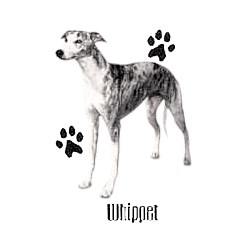 Whippet T-Shirt - Profiles