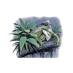 Iguana T-Shirt - With Sunglasses