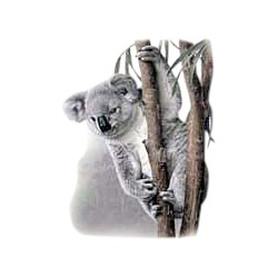 Koala T-Shirt - With Cub
