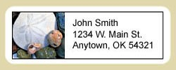 Sand Dollar Address Labels