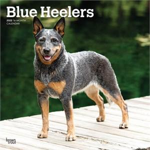 Blue Heelers Calendar 2015