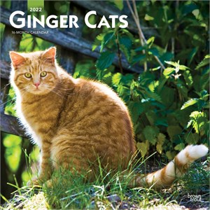 Ginger Cats Calendar 2014