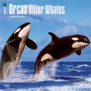 Orcas Calendar 2015