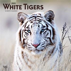 White Tigers Calendar 2015