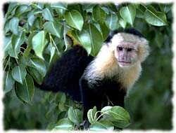 Monkey T-Shirt - Photo
