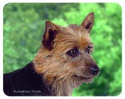 Australian Terrier Coasters