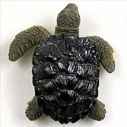 Sea Turtle Magnet