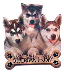 Siberian Husky T-Shirt - Trio of Three