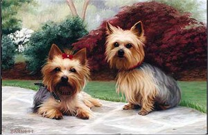 Yorkshire Terrier Floormat
