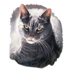 Gray Cat T-Shirt - Perfectly Portrayed