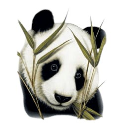 Panda Bear T-Shirt - Adorable Illustration