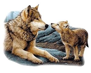 Wolf T-Shirt - Curious Pup