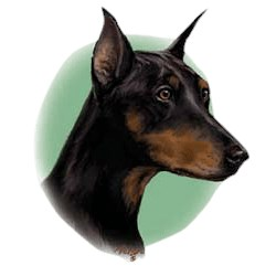 Doberman Pinscher T-Shirt - Linda Picken