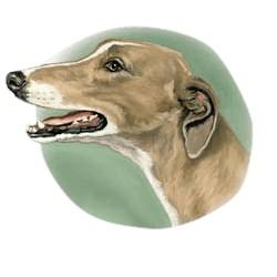 Greyhound T-Shirt - Linda Picken
