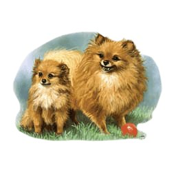 Pomeranian T-Shirt - Linda Picken