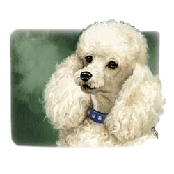 White Poodle T-Shirt - Linda Picken